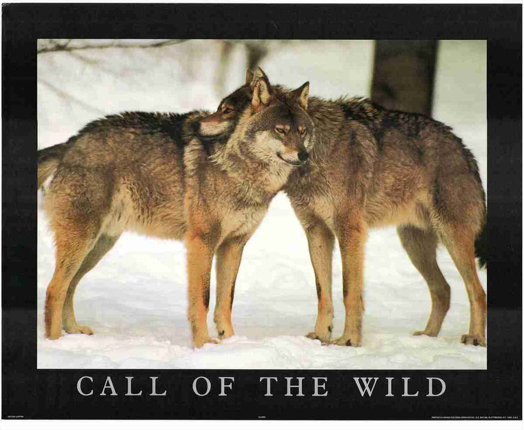 Snow Wolves Wild Animal Wall Decor Art Print Poster (16x20)