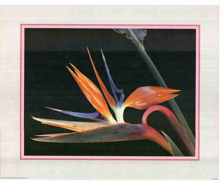 Beautiful Floral Fine Art Flower Wall Decor Print Poster (16x20)