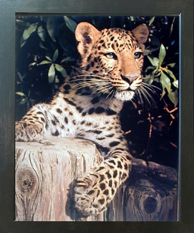 Wild Animal Wall Home Decor Framed Poster Leopard (Panther, Jaguar, Big Cat) Art Print Picture