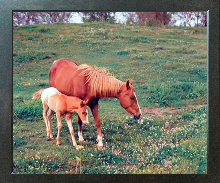 Horse Mare and Colt Wildlife Animal Wall Decor Espresso Framed Picture Art Print (20x24)