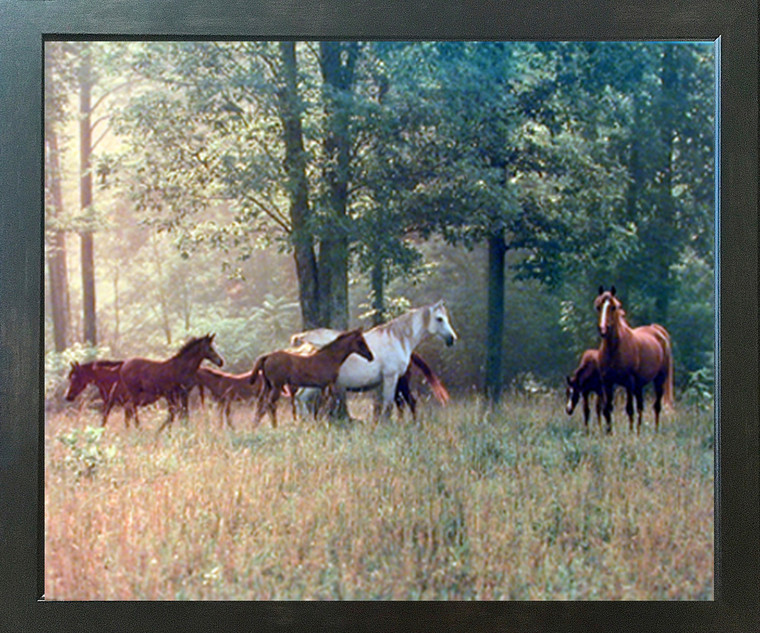 Horses in Pasture Animal Wildlife Wall Decor Espresso Framed Picture Art Print (20x24)