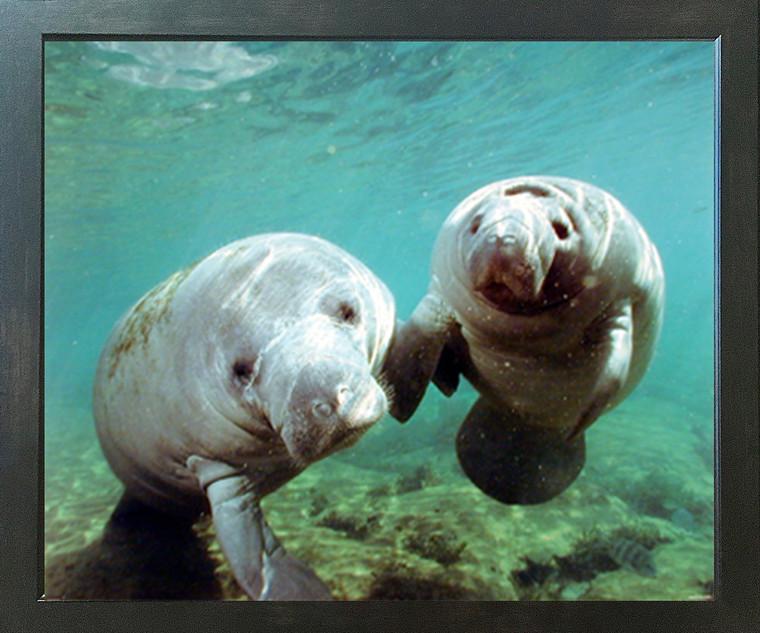 Pair of Manatee Doug Perrine Ocean Animal Wall Decor Espresso Framed Picture Art Print (20x24)