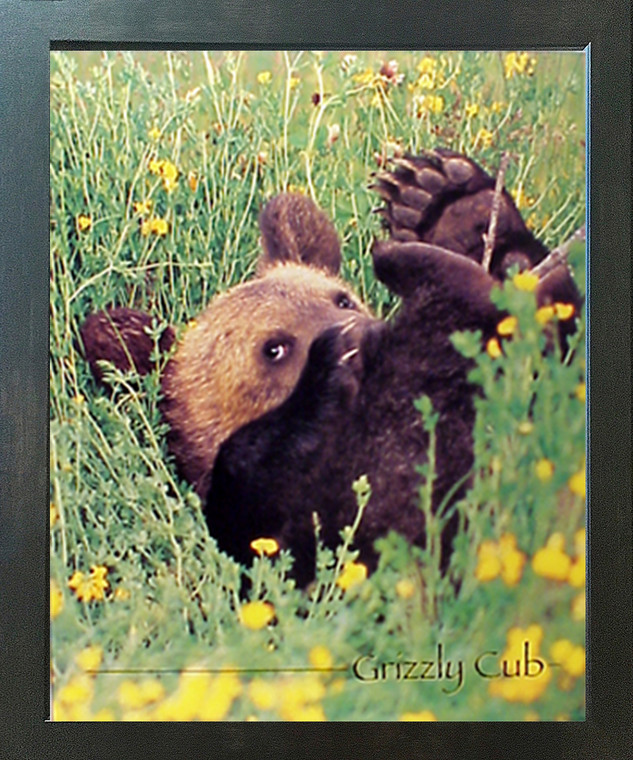 Cute Grizzly Bear Cub Animal Kids Room Wall Decor Espresso Framed Picture Art Print (20x24)