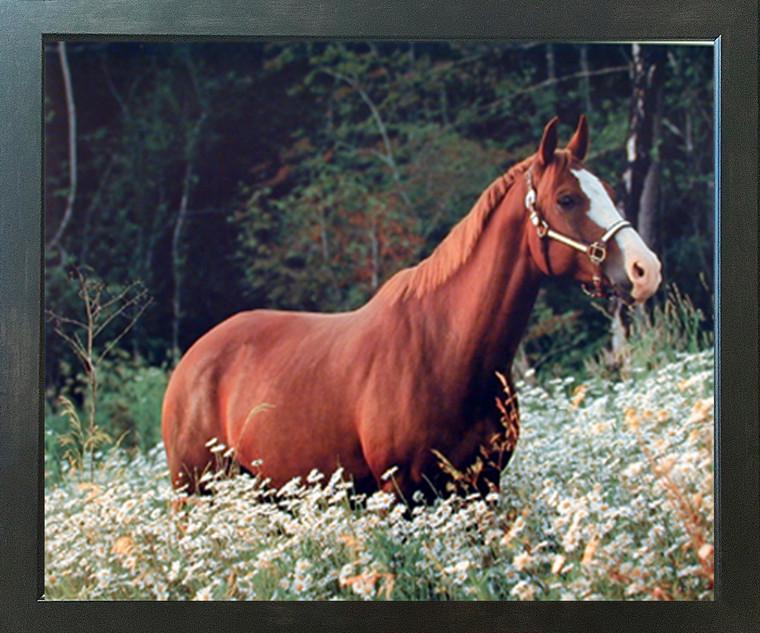 Caspian Horse in Daisy Field Wildlife Animal Wall Espresso Framed Picture Art Print (20x24)
