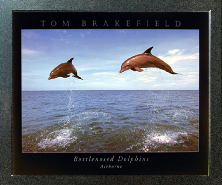 Bottlenose Dolphins Jumping In Air Ocean Animal Nature Wall Decor Picture Espresso Framed Art Print (20x24)