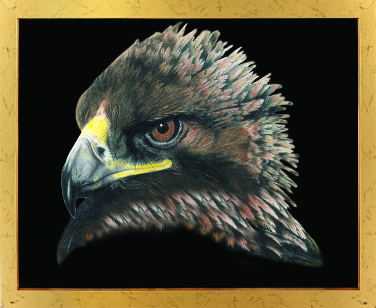 American Bald Eagle Bird Picture Golden Framed Wall Decor Art Print Poster (18x24)