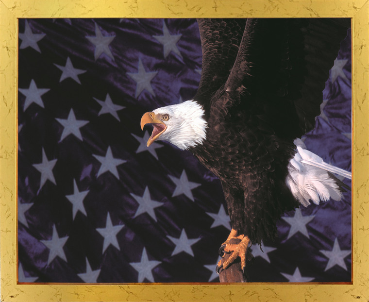 American Bald Eagle Flying Golden Framed Wall Decor Art Print Poster (18x24)