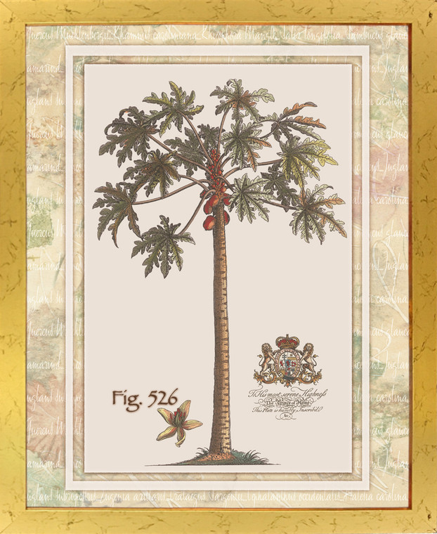 Tropical Palm Tree Vintage Fig 526 Contemporary Wall Decor Golden Framed Art Print Poster (18x24)