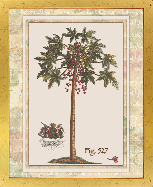 Vintage Tropical Palm Tree Fig 527 Contemporary Wall Decor Golden Framed Art Print Poster (18x24)