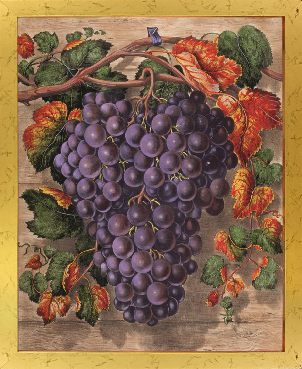 Black Grape Still Life Fruit Kitchen Wall Decor Art Print Golden Framed Poster (18x24)