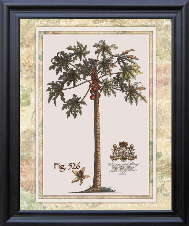 Tropical Palm Tree Vintage Fig 526 Contemporary Wall Decor Black Framed Art Print Poster (19x23)