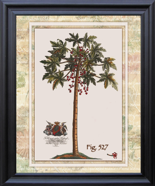 Vintage Tropical Palm Tree Fig 527 Contemporary Wall Decor Black Framed Art Print Poster (19x23)