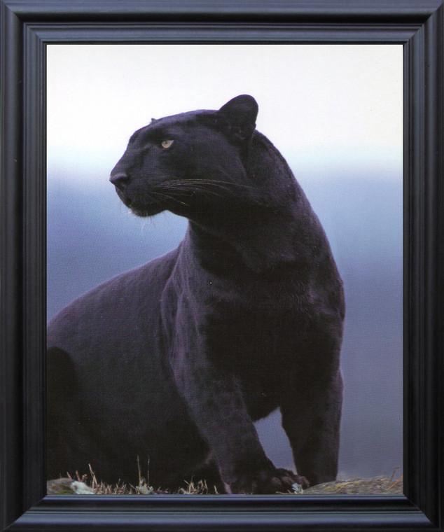 Black Panther Wildlife Big Cat Animal Wall Decor Black Framed Art Print Poster (19x23)