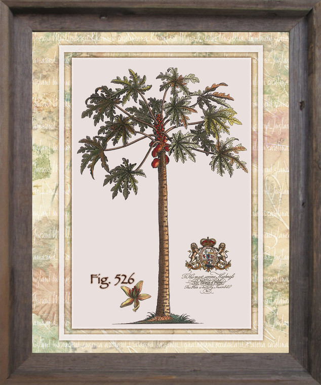 Tropical Palm Tree Vintage Fig 526 Contemporary Wall Decor Barnwood Framed Art Print Poster (19x23)