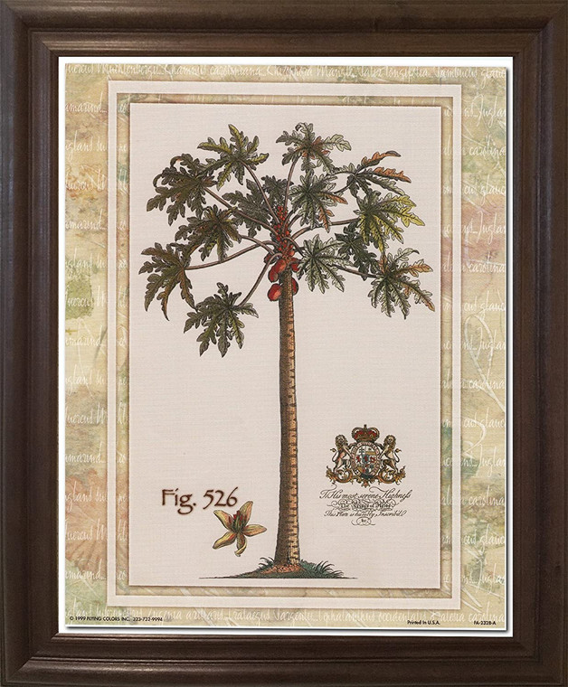 Tropical Palm Tree Vintage Fig 526 Contemporary Wall Decor Brown Rust Framed Art Print Poster (19x23)