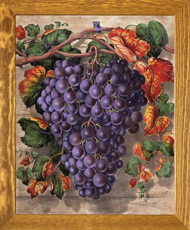 Black Grape Still Life Fruit Kitchen Wall D??cor Brown Rust Framed Art Print Poster (19x23)