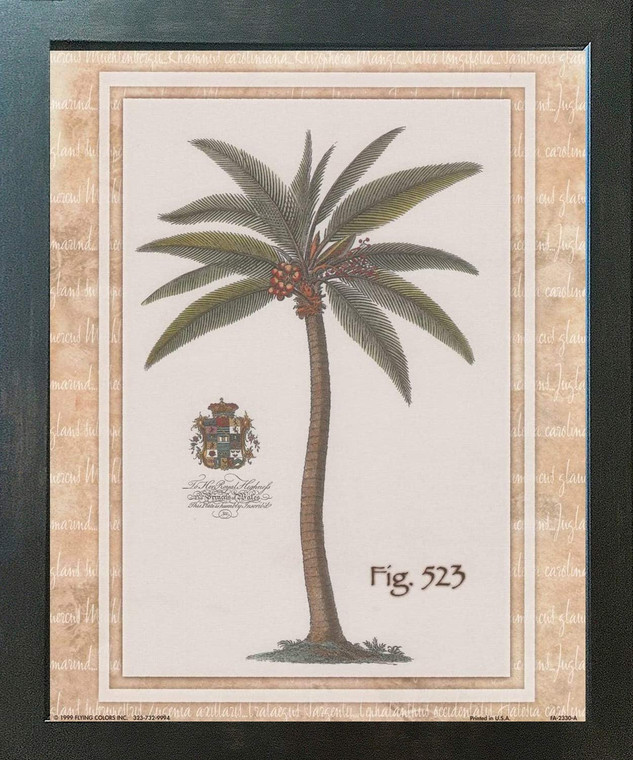 Vintage Palm Tree Fig 523 Tropical Wall Decor Espresso Framed Art Print Poster (18x24)
