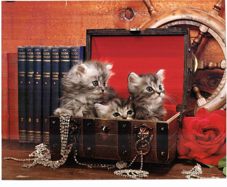 Three Cats in a Chest Poster