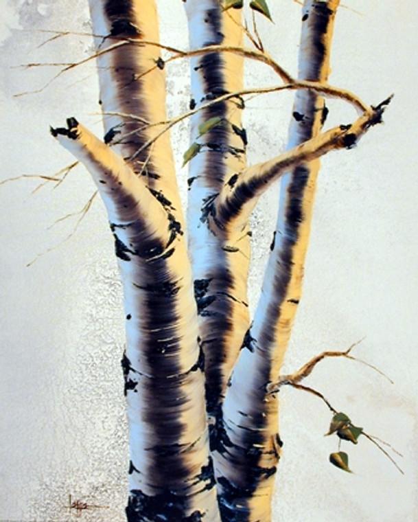 Aspens III Tree Nature Art Print Posters (16x20)