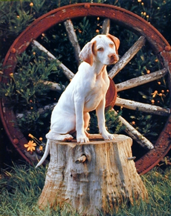 English Pointer Dog Animal Wall Decor Art Print Poster (16x20)