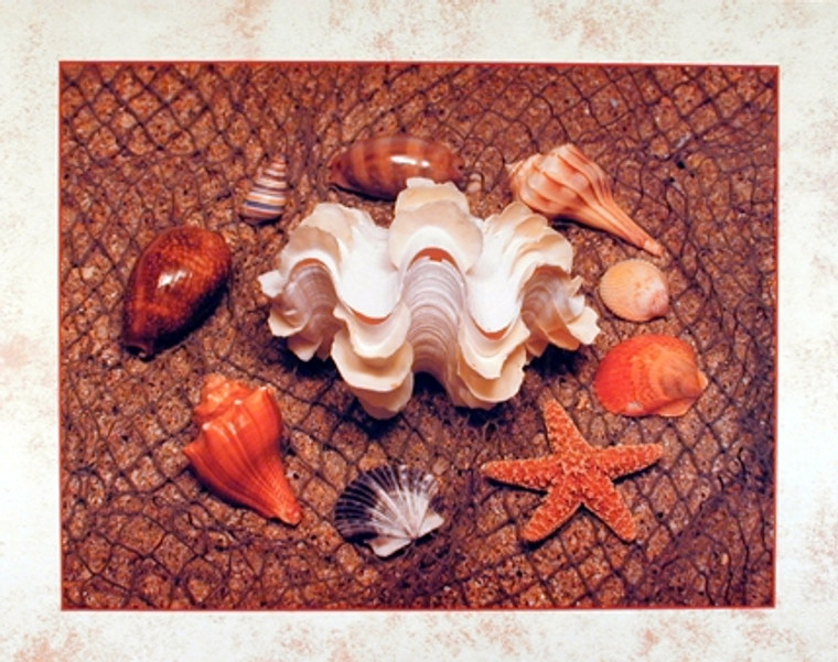 Starfish with Seashell Ocean Bathroom Wall Decor Art Print Poster (16x20)