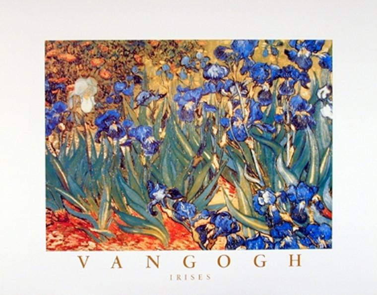 Irises Flower Garden (Floral) Vincent Van Gogh Wall Decor Fine Art Print Picture (16x20)