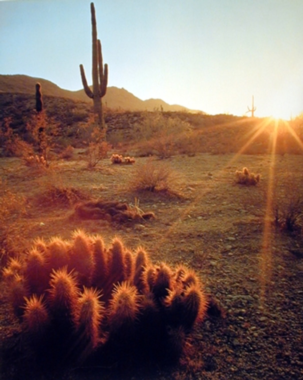 Southwest Cactus Field Sunset Desert Scenic Wall Decor Art Print Poster (16x20)
