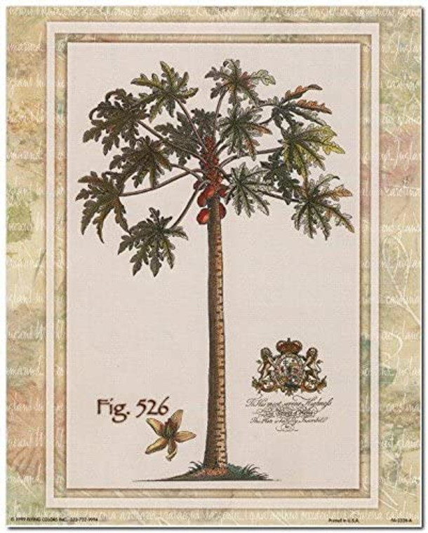 Tropical Palm Tree Vintage Fig 526 Contemporary Wall Decor Art Print Poster (8x10)