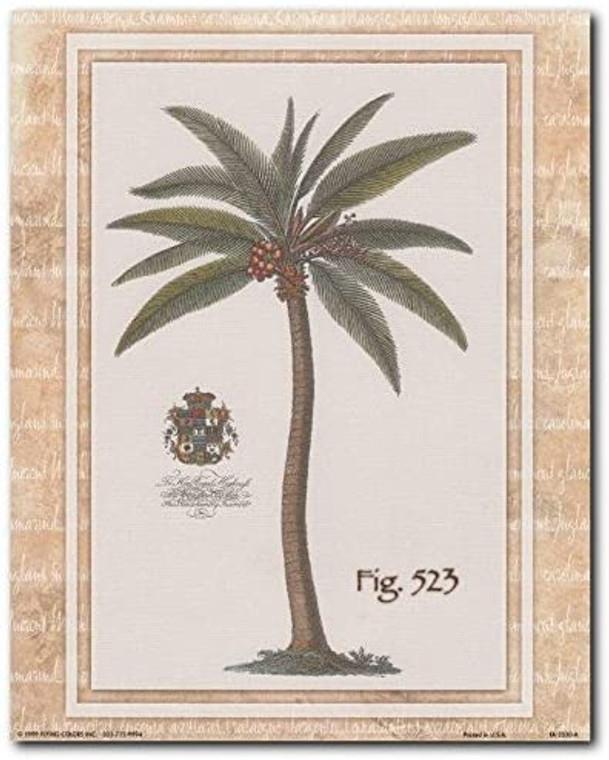 Vintage Palm Tree Fig 523 Tropical Art Print Poster (8x10)