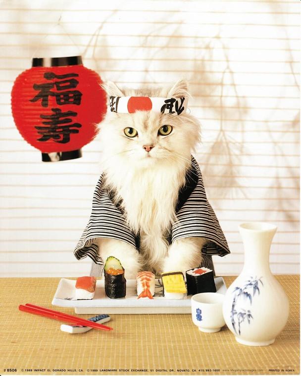 Japanese Sushi Cat Cute Kitten Kids Room Wall Decor Art Print Picture (8x10)