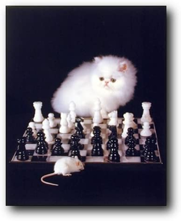 Cute White Kitten and Mouse Playing Chess Game Motivational Animal Wall Decor Art Print Picture (8x10)