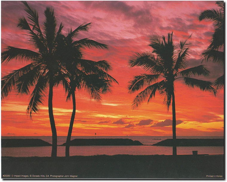 Coastal Mood Ocean Beach Sunset & Palm Trees Scenery Landscape Wall Decor Art Print Poster (8x10)
