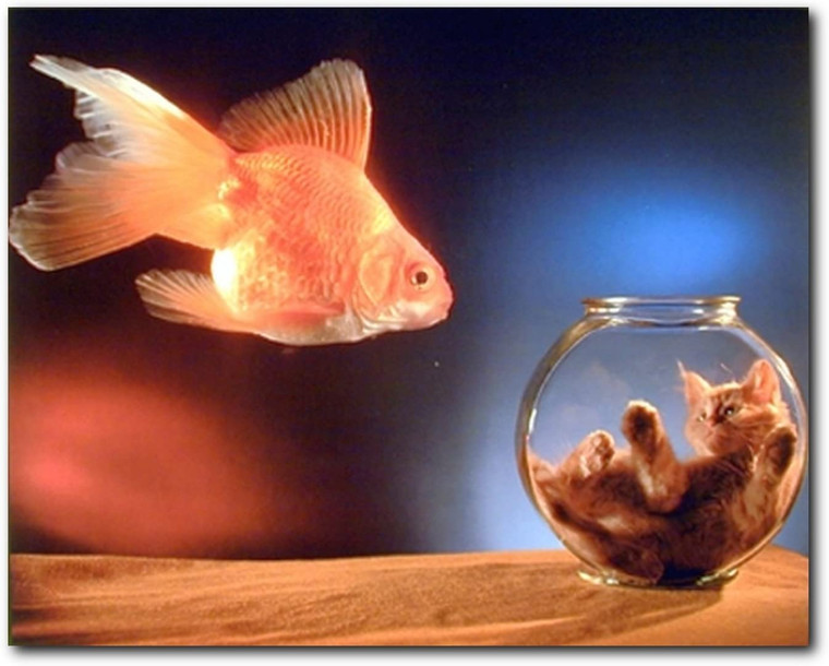 Goldfish and Cute Cat Kitten in a Fishbowl Animal Art Print Poster (8x10)