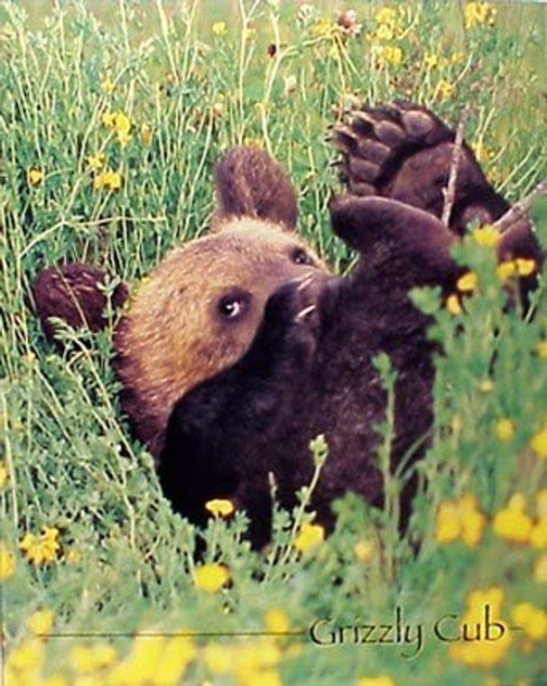 Cute Grizzly Bear Cub Animal Kids Room Wall Decor Picture Art Print (8x10)
