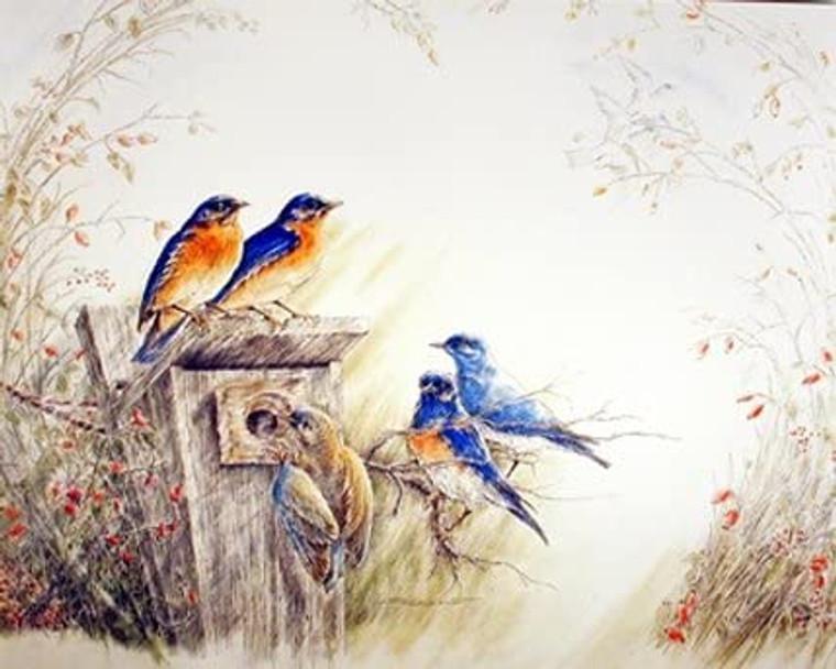 Bluebirds on Tree Feeder Bird Animal Wall Decor Picture Art Print (8x10)
