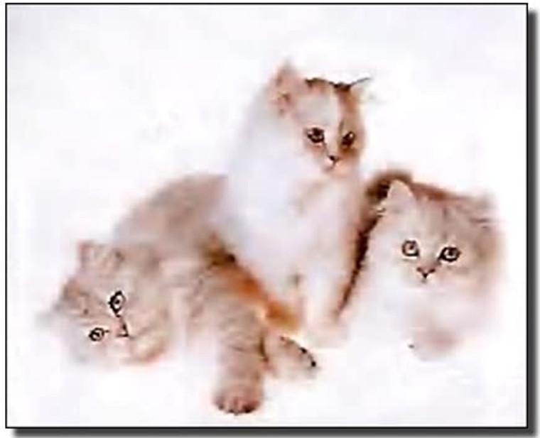 White Cute Cats Funny Kitten Animal Kids Room Art Print Poster (8x10)