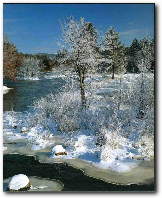 Yosemite National Park Snow River and Trees Scenery Landscape Wall Decor Art Print Picture (16x20)