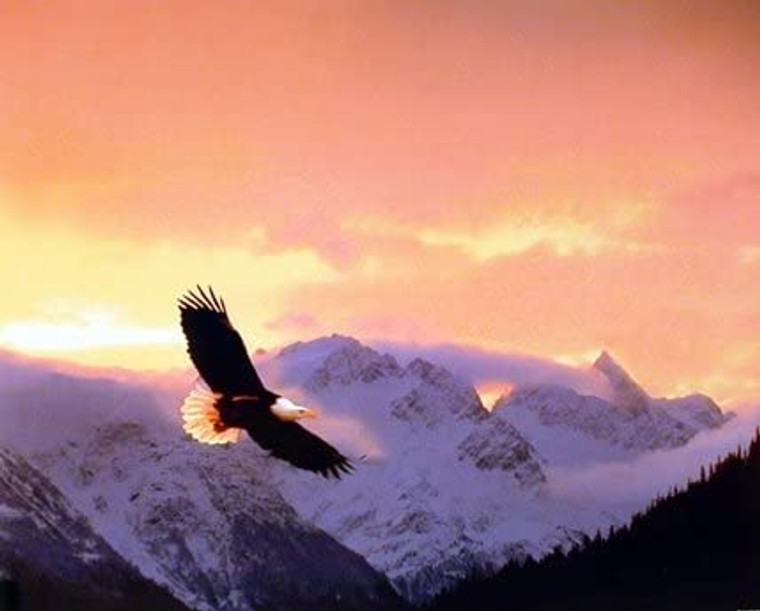 Eagle Wall Decor Flying Sunset Kirk Yarnell Animal Bird Art Print Poster (16x20)