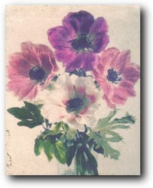 Anemone flowers Floral Still Life Wall Decor Art Print Poster (16x20)