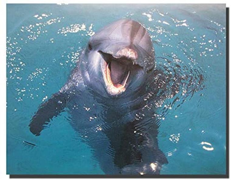 Dolphin Underwater Ocean Animal Wall Decor Art Print Poster (16x20)