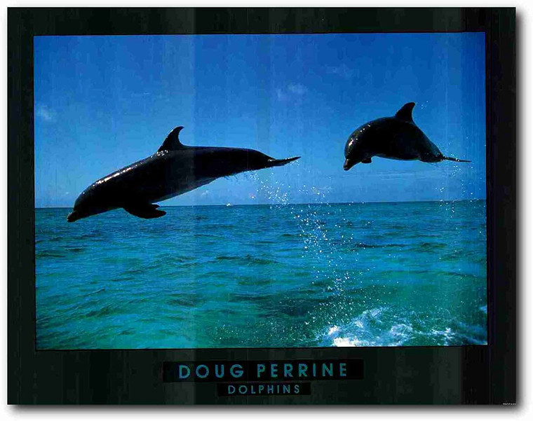 Wall Decor Doug Perrine Dolphin Jumping Ocean Picture Art Print Poster (22x28)