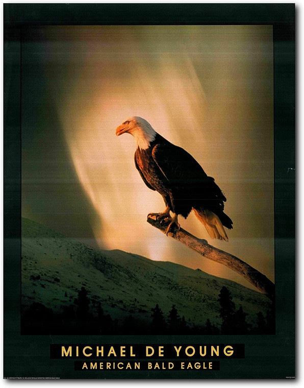 Picture Wall Decoration American Bald Eagle Bird Art Print Poster (22x28)