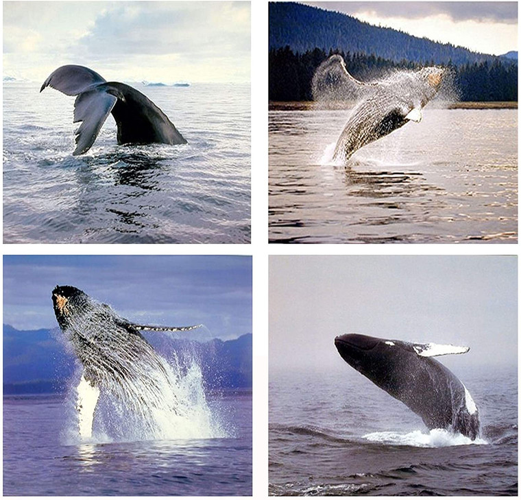 Ocean Wall Decor Humpback Whale Sea Underwater Animal Picture 16x20 Four Set Art Print Poster