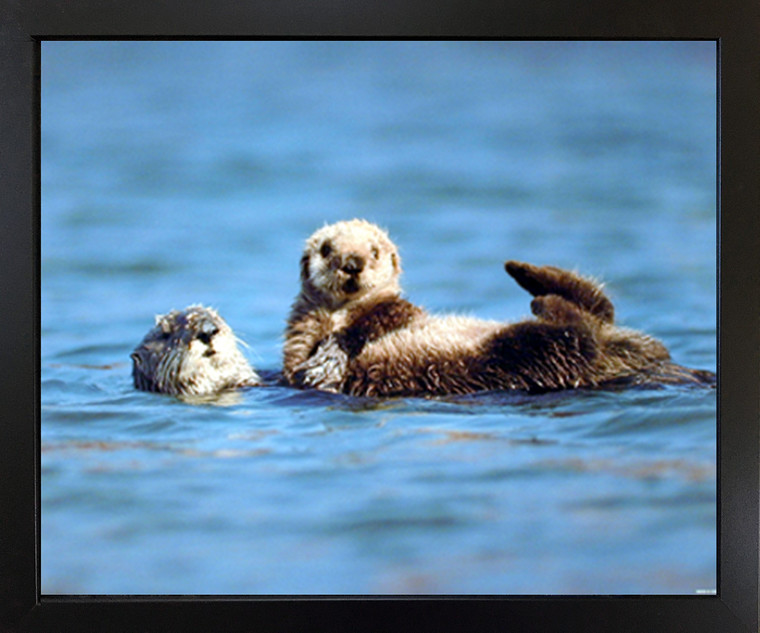 Wall Picture Decor Sea Otter & Pup Baby Ocean Animal Black Framed Art Print (18x22)