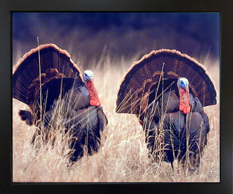Framed Wall Decoration Pair of Wild Turkeys Hunting Animal Bird Picture Black Framed Art Print (18x22)