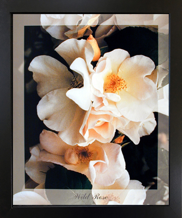 Black Framed Wall Decoration Wild Rose Flowers Floral Frame Picture Art Print (18x22)