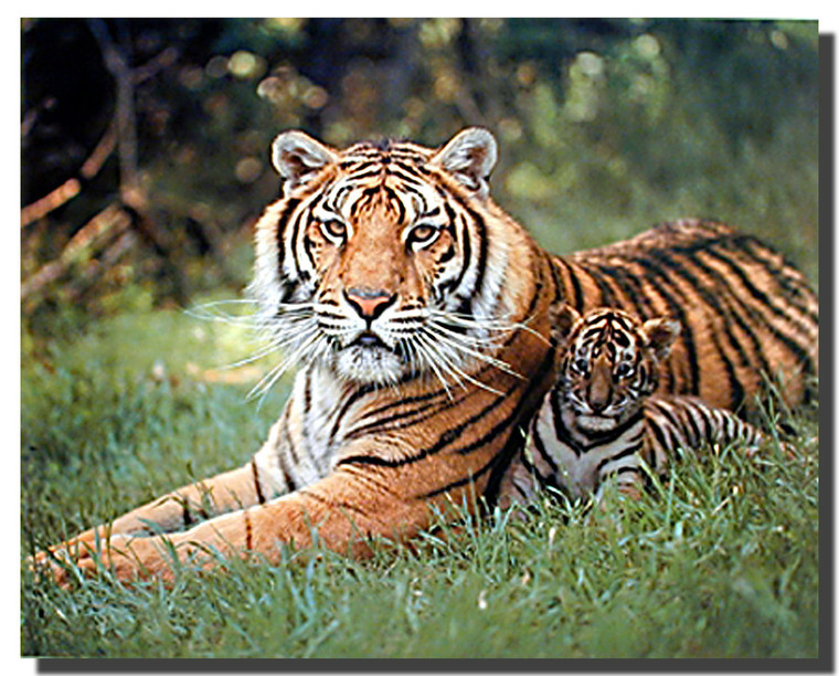 Tigress and Cub Art Print