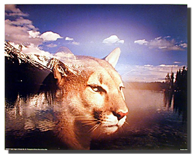 Mountain Lion and Grand Teton Poster