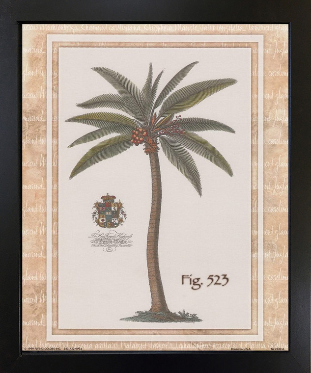 Vintage Palm Tree Fig 523 Tropical Wall Decor Black Framed Art Print Picture (18x22)