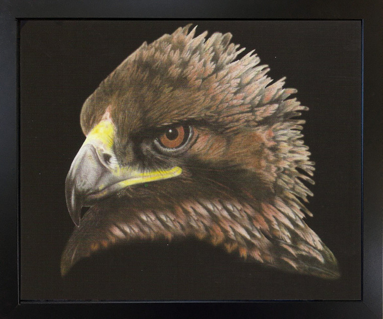 American Bald Eagle Bird Picture Wall Decor Black Framed Art Print Picture (18x22)